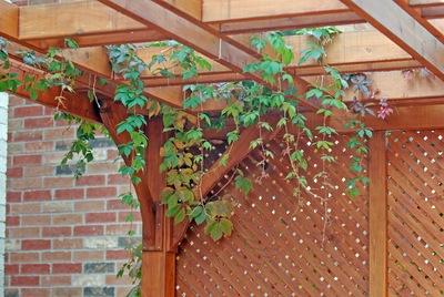 Top 5 Reasons to Install a Pergola
